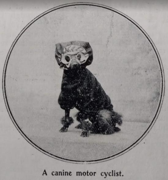 1903 cannine mcist