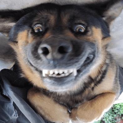 1912 MAD DOG