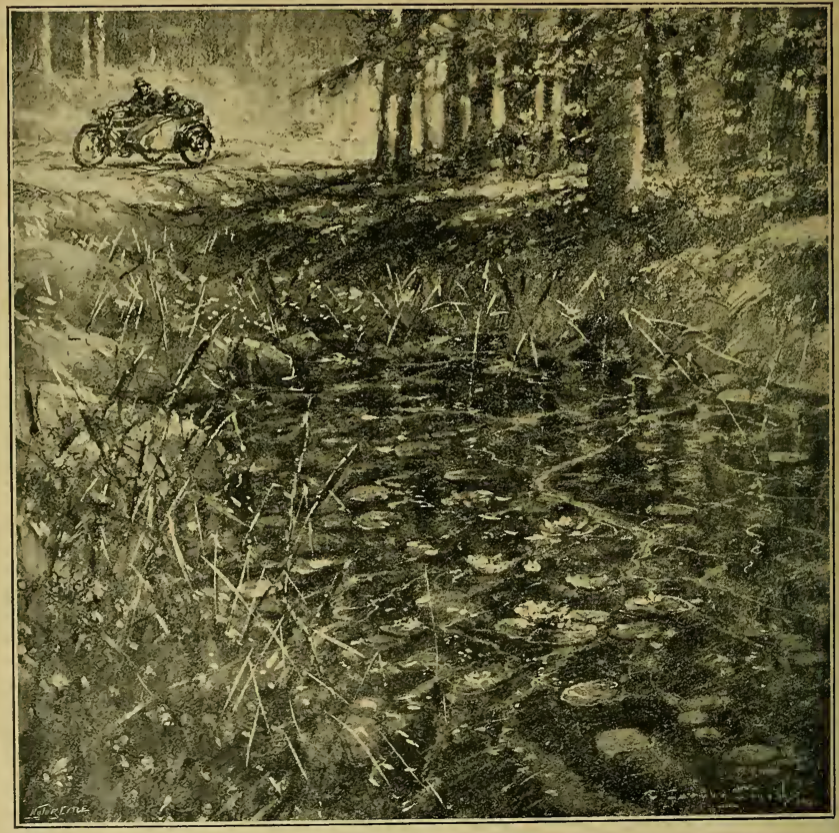 1919 FOREST SHADE PIC