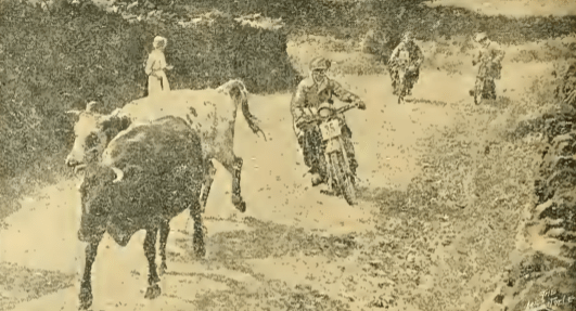 1914 6DT BULLS